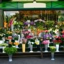 Groothandel bloemen en planten